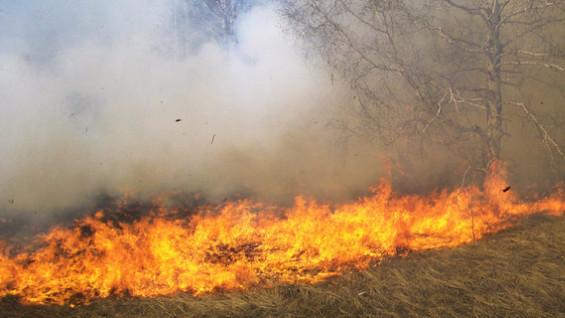 В Самарской области к поджигателям травы применят жесткие меры