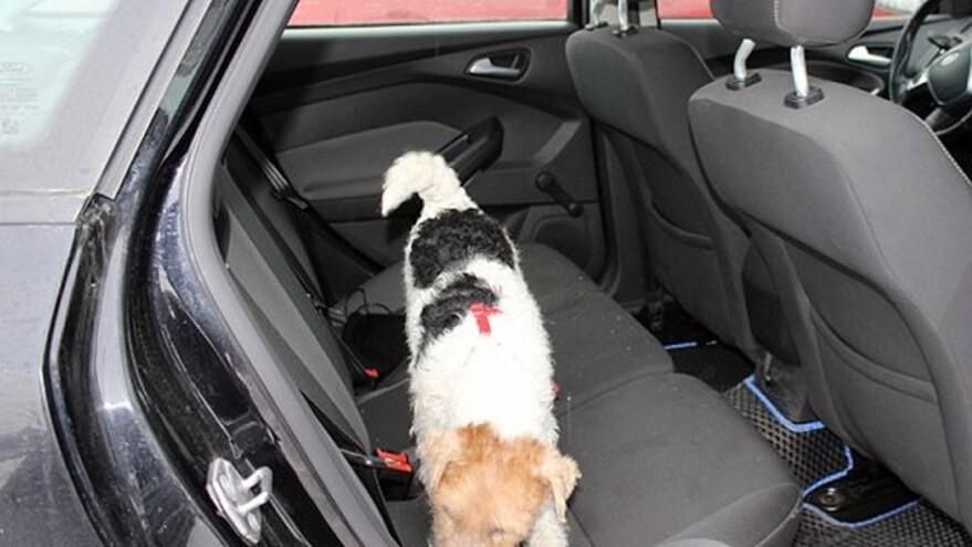 Белла из Тольятти нашла по запаху гашиш в машине