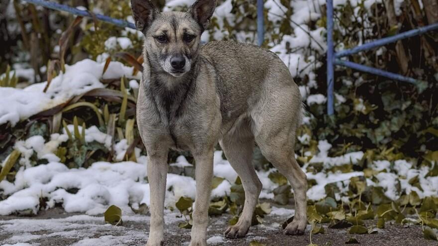 В Самарской области откроется центр реабилитации животных
