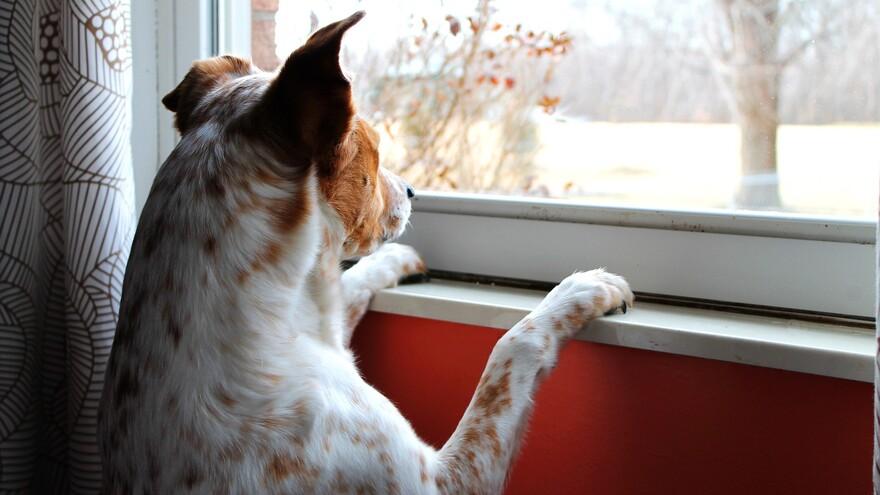 5 плохих примет про окна и занавески