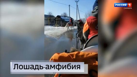 """""""Вести Самара"""": жители села Торновое переходят на гужевой транспорт"""