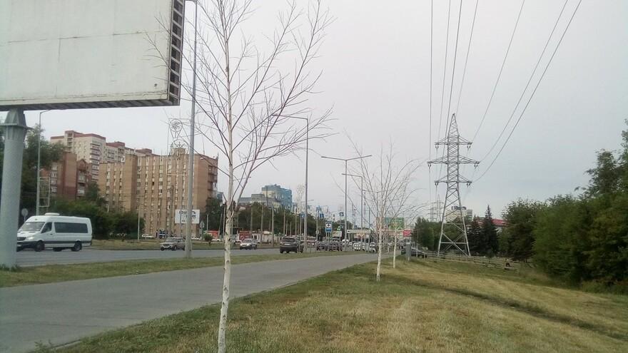 В Самаре на Ново-Садовой высохли новые деревья