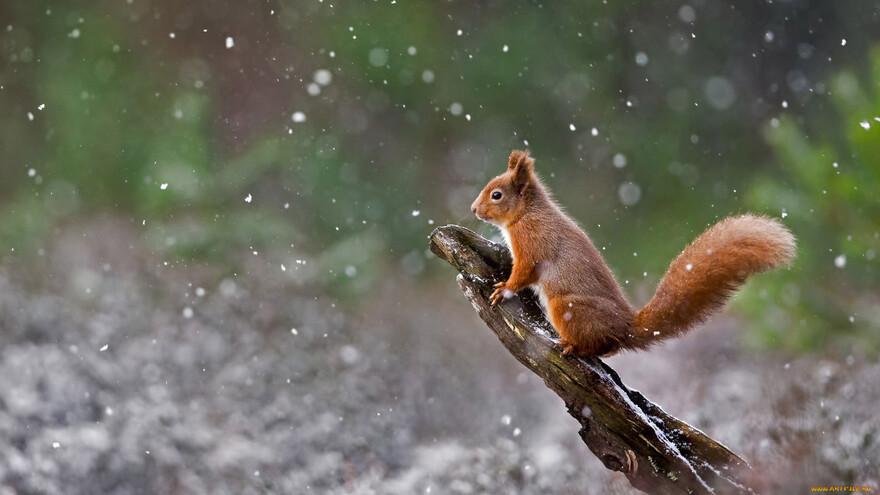 В Самаре ожидается снег: синоптики предсказали погоду на 3 дня
