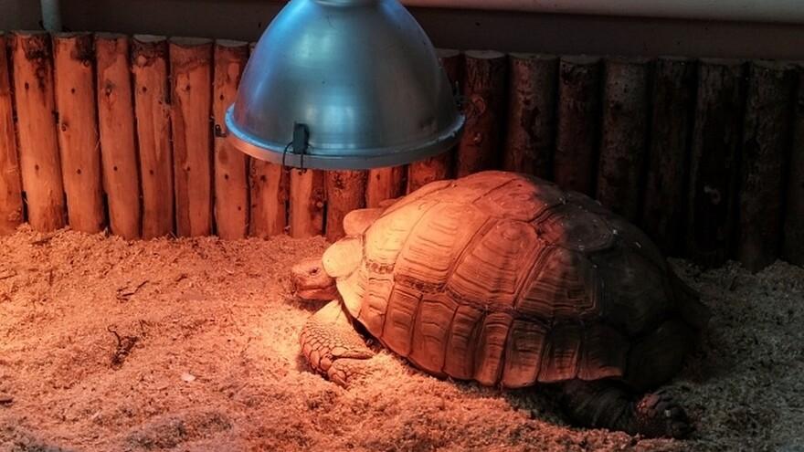 В Самаре спасли черепаху, съевшую камни