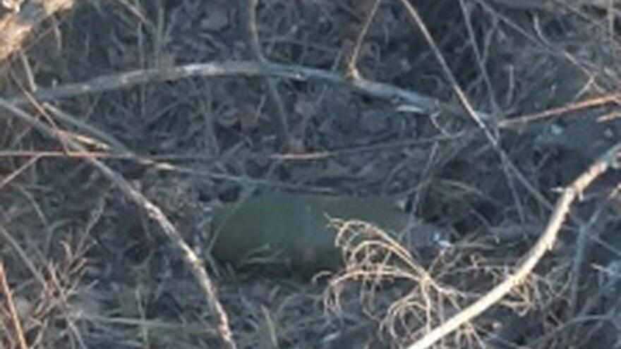 Под Сызранью в лесопарке нашли взрывоопасные боевые снаряды