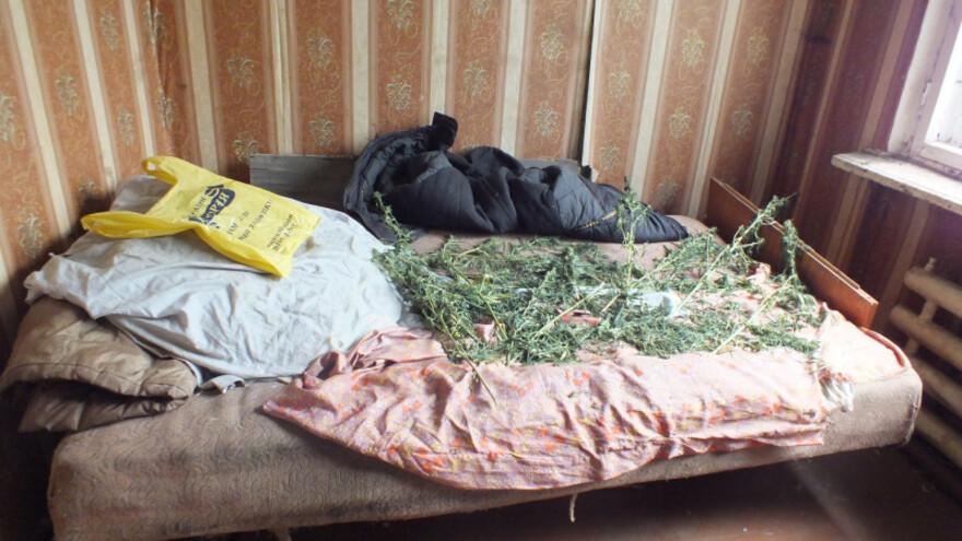 За хранение почти 300 граммов марихуаны пойдет под суд житель Авангарда