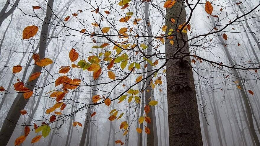 В Самарской области из-за тумана сохраняется желтый уровень опасности