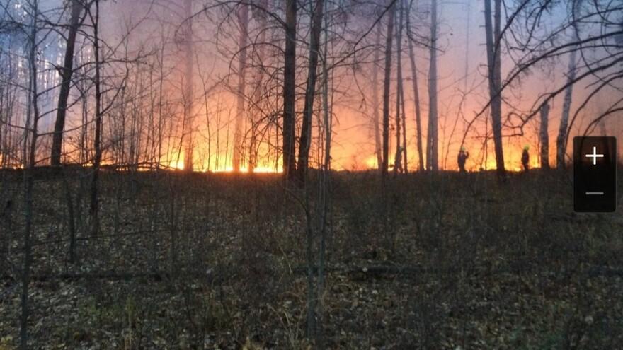 В Тольятти потушили низовой лесной пожар