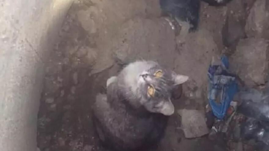 В Сызрани кота Василия несколько часов спасали из западни