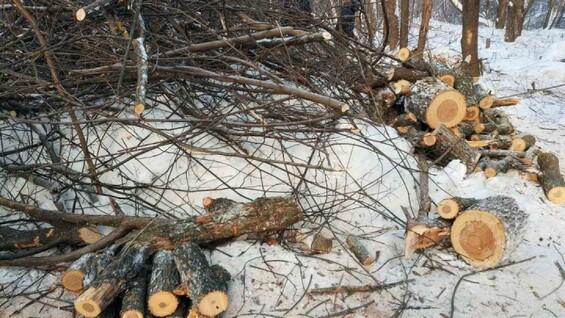 Власти Самары ответили на претензии о рубке деревьев в Сорокиных Хуторах