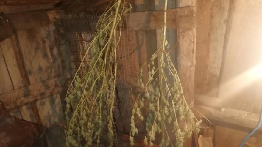 У жителя Октябрьска полицейские обнаружили тайник полный зелья