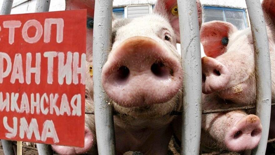коронавирус свиней