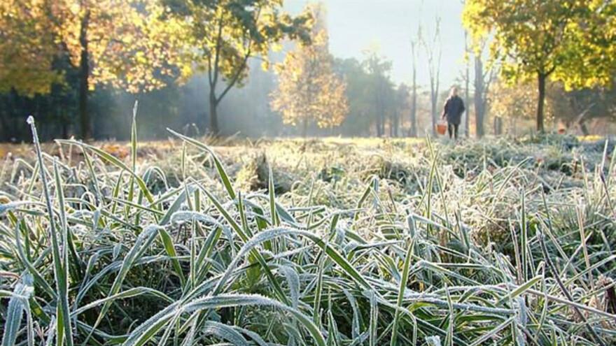 В Самарской области ожидаются заморозки на выходных