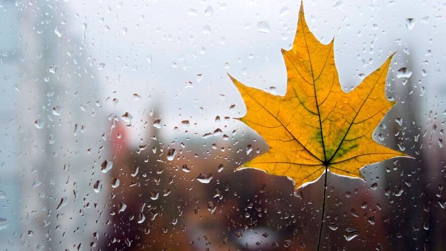 В Самарской области в начале рабочей недели будут дожди