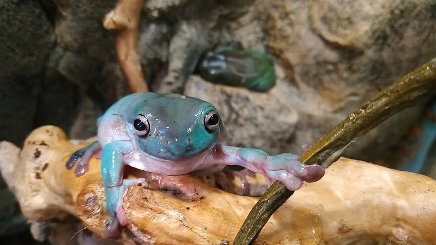В Самарском зоопарке появились 3 новые амфибии