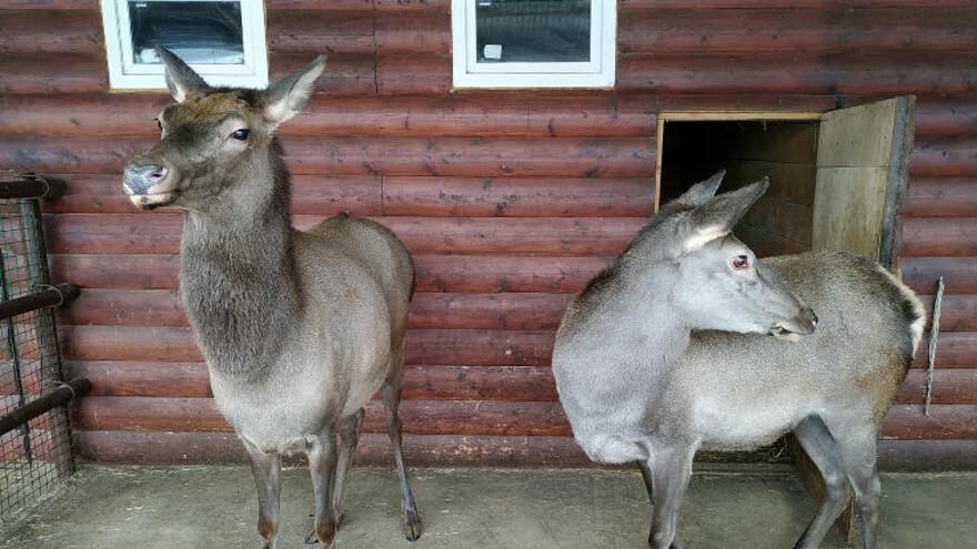 Новые животные появились в Самарском зоопарке