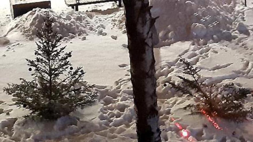 В Самаре вандалы вырубают молодые елочки в сквере на улице Авроры