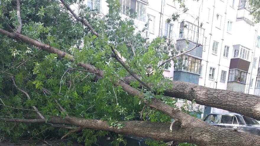 В Тольятти упало дерево на припаркованную на газоне Волгу