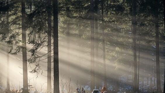 В Самарской области прогулка по лесу стала платной