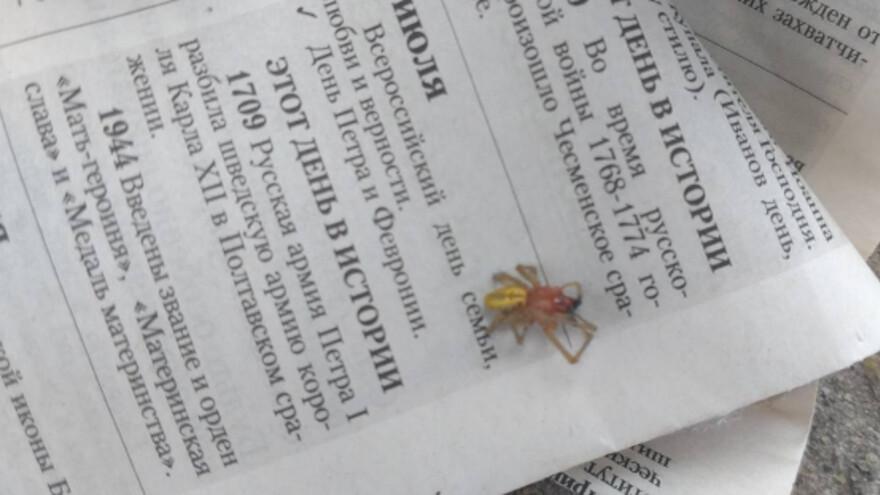 Ядовитый паук под Сызранью укусил мужчину и отправил в больницу