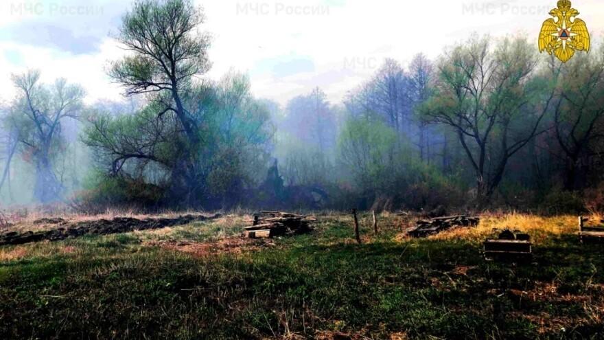 В Самарской области введен 4-й класс пожароопасности лесов