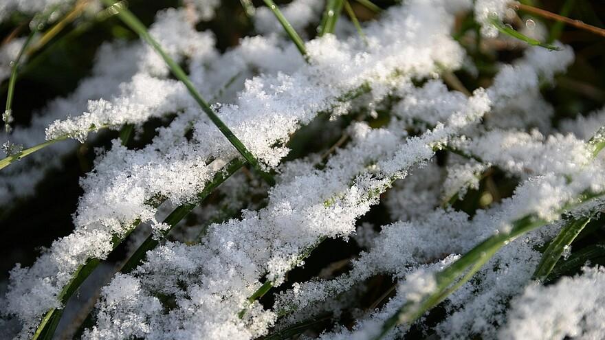 В Самарскую область пришли снегопад и заморозки до -7 градусов