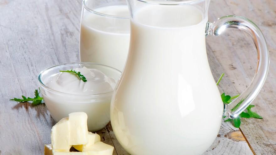 В Самаре в молоке, ряженке и сыре обнаружена кишечная палочка