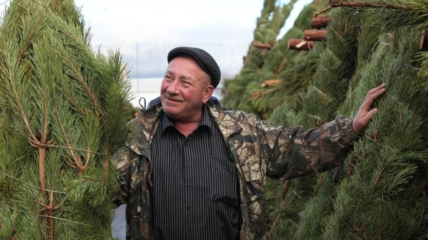 Как правильно выбрать новогоднюю елку в Самаре