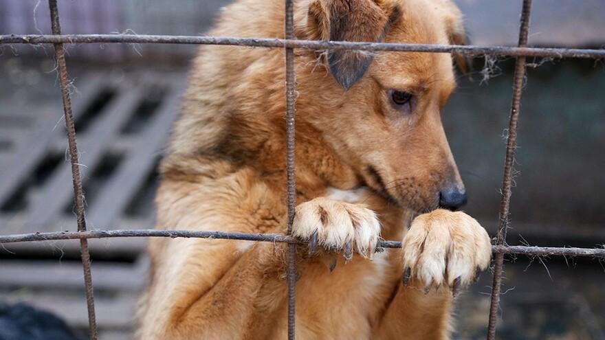 В Самарской области увеличен норматив на отлов бродячих животных