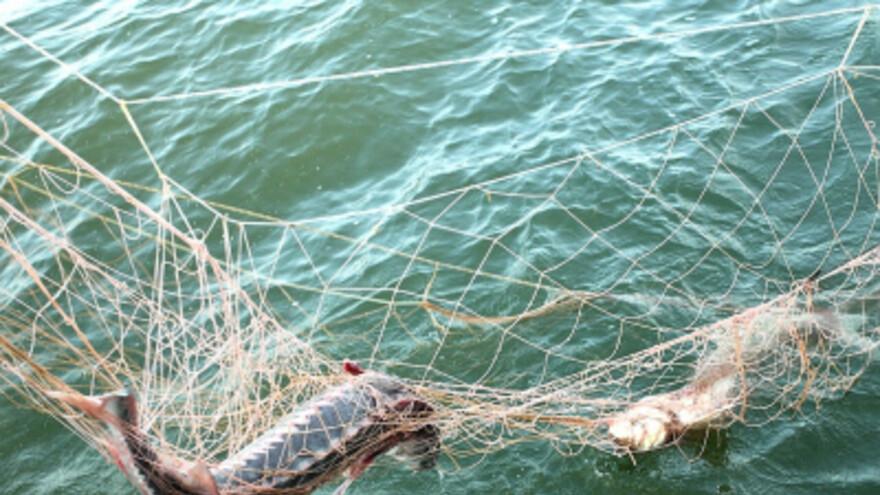 В Самарской области поймали рыбака-браконьера