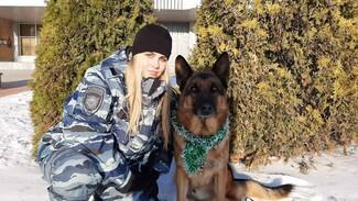 В Тольятти пес задержал в лифте вора со спиртным за несколько часов до Нового года