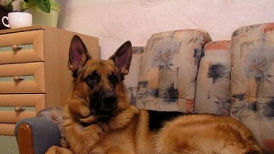 В Тольятти большая собака не подпустила врачей к умирающему хозяину