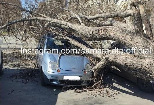 Последствия сильного ветра: в Самаре дерево раздавило автомобили
