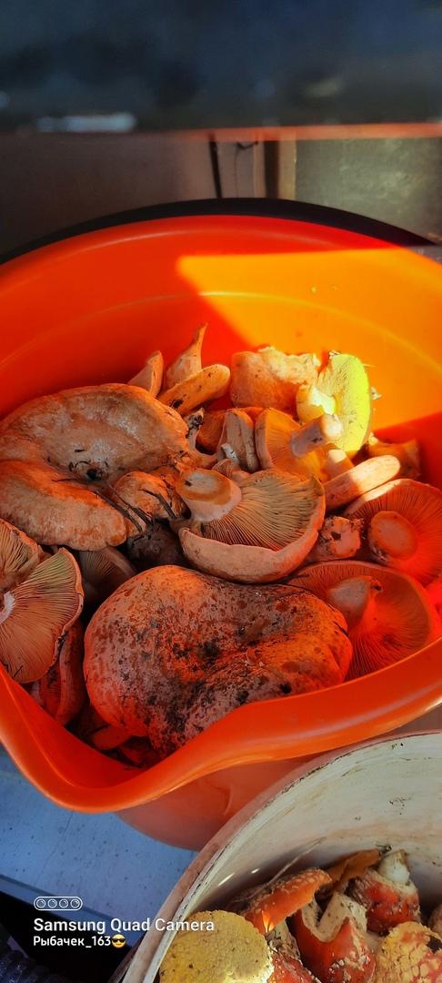 В Самарской области начался грибной сезон