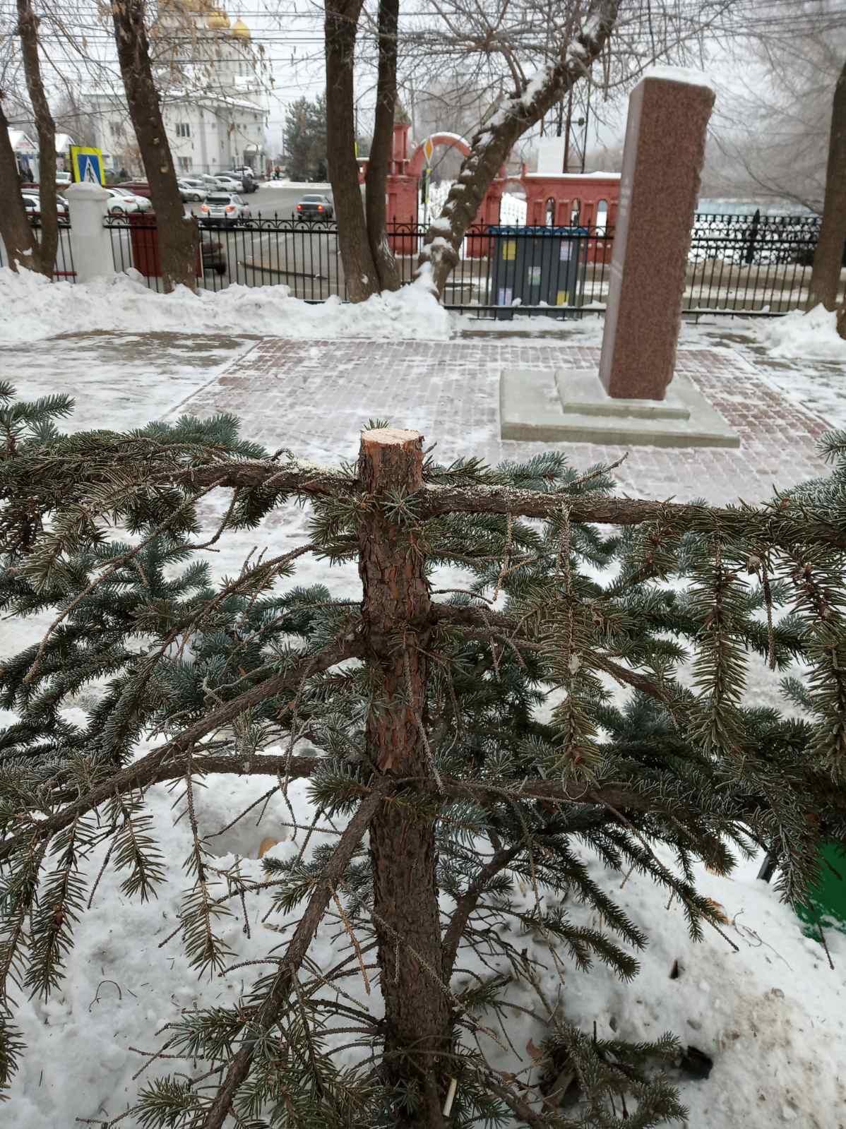 В Самаре вандалы срубили сосны в сквере на Красной Глинке