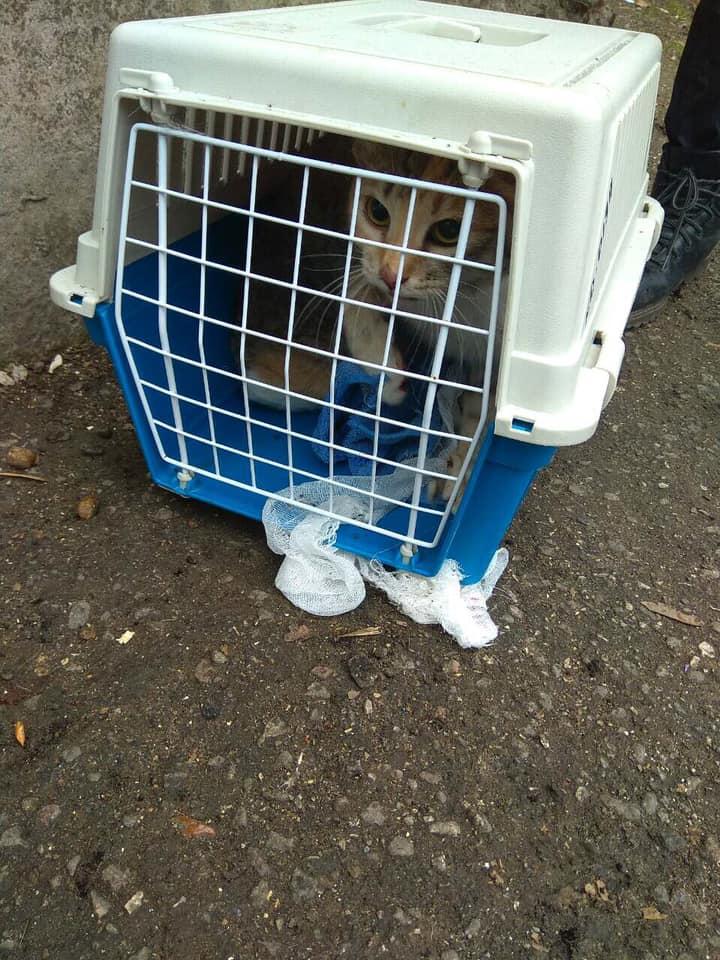 В Тольятти спасли застрявшего под плитами кота