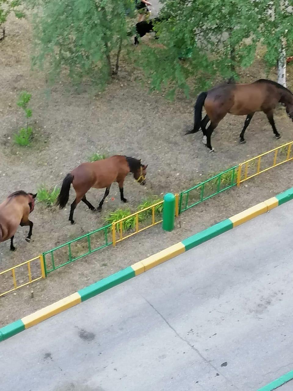 В Тольятти по улицам ходят лошади
