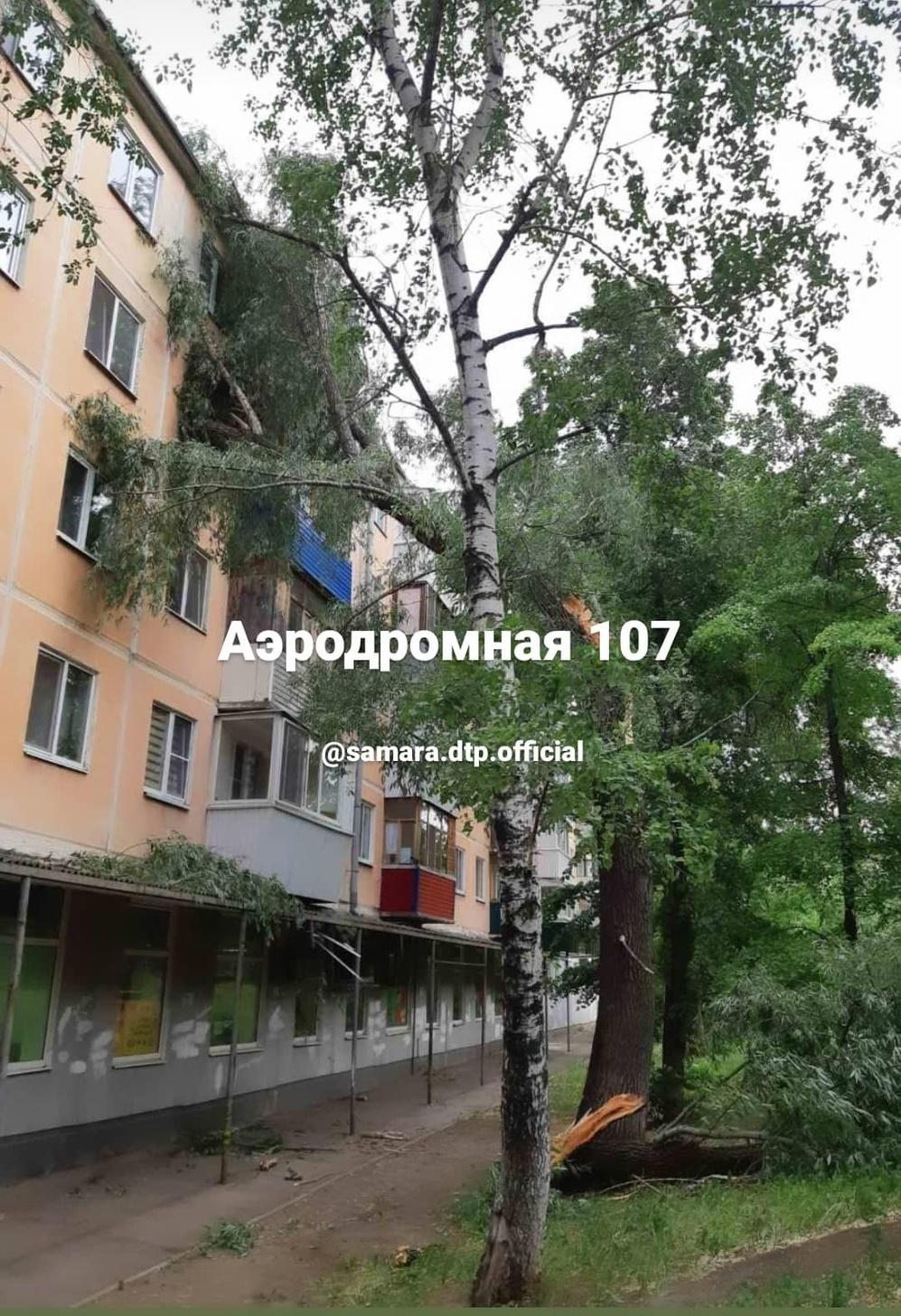 В Самаре на улице Аэродромной упавшее дерево выбило окна в квартире