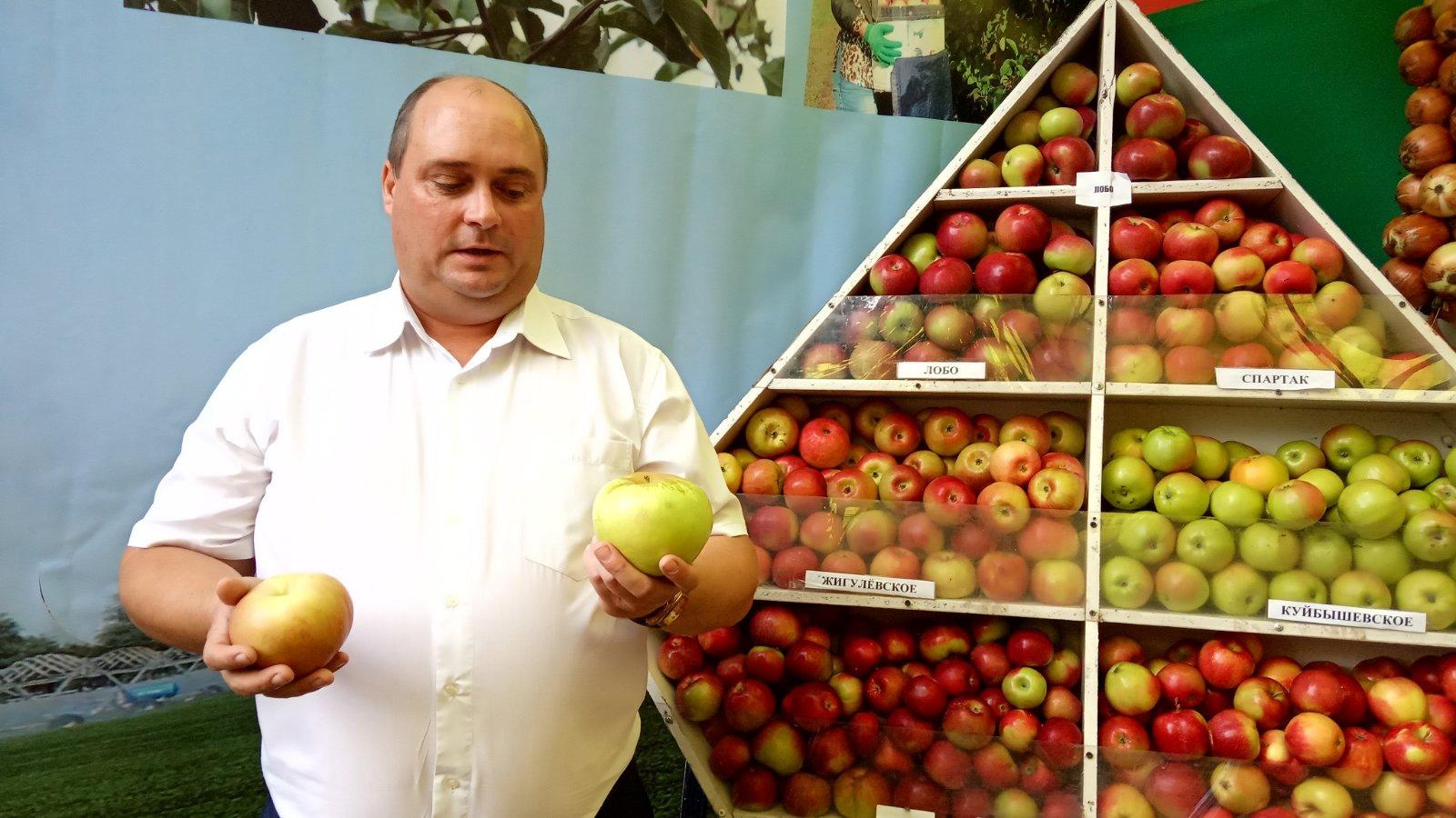 Яблоки весом в треть килограмма! Самарцев удивили плодами-гигантами