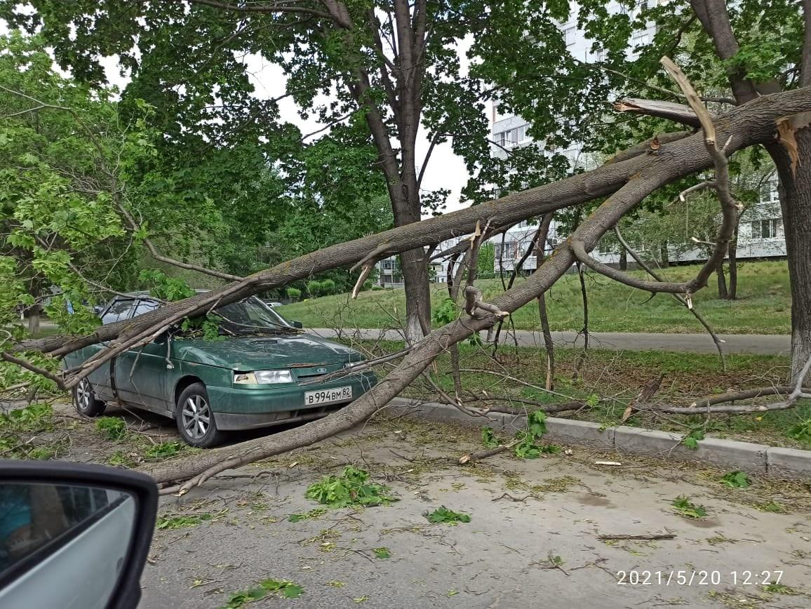 В Тольятти шквалистым ветром дерево повалило на автомобиль