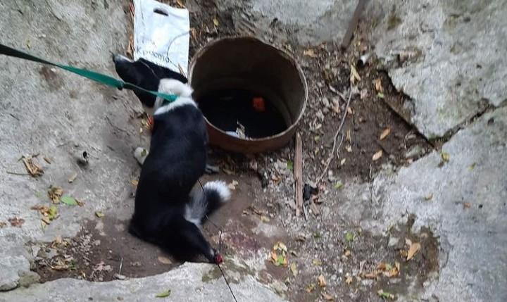 Душераздирающие кадры: В Самаре собака повисла на тросе, животное пострадало