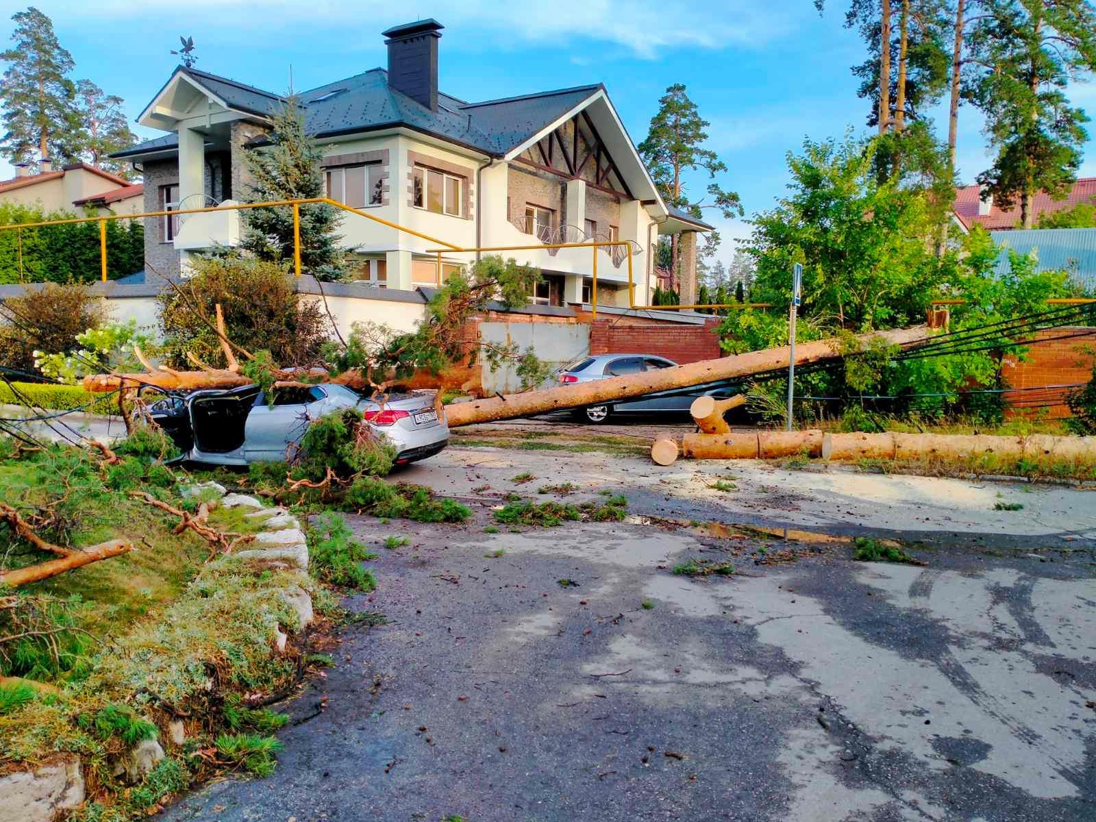 В Тольятти дерево раздавило женщину в иномарке