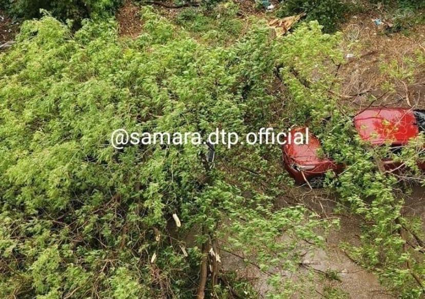 В Самаре упавшее дерево раздавило две машины