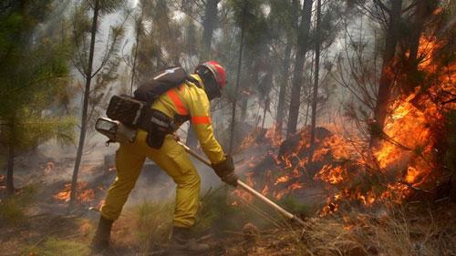 ВКольском районе гасят  условный природный пожар